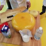 Wat zit er eigenlijk in Kaas?